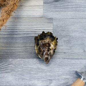 Huître creuse de Cancale non laiteuses