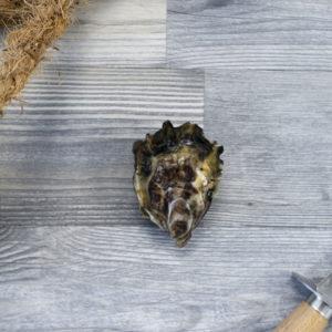 Huître creuse non laiteuse de Cancale 5