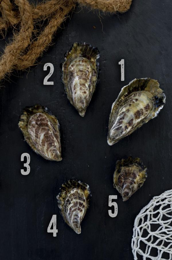 Huîtres creuses non laiteuses de Cancale