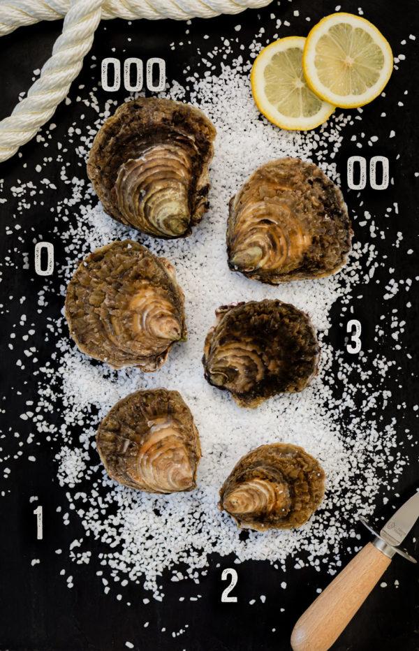 Huîtres plates de Cancale